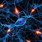 Picture of neurons